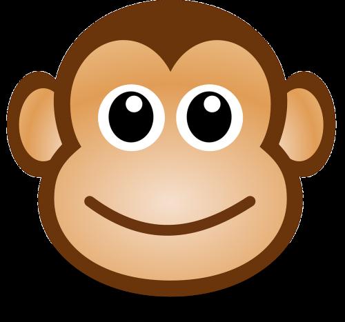 monkey ape anthropoid
