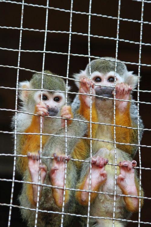 monkey nagasaki bio park zoo
