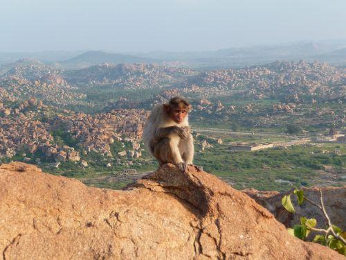 monkey mountain äffchen