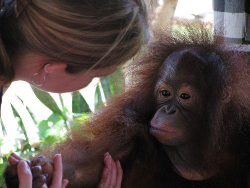 monkey bali primate