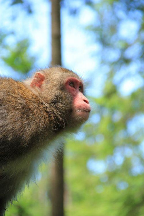 monkey äffchen nature