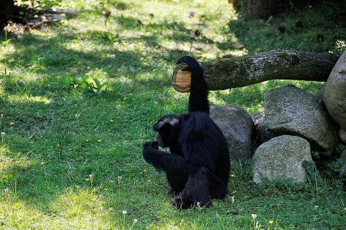 monkey äffchen wild