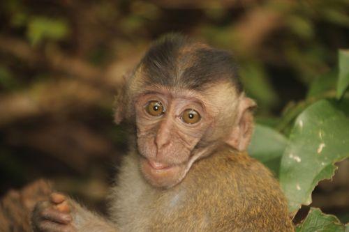 monkey baby monkey child