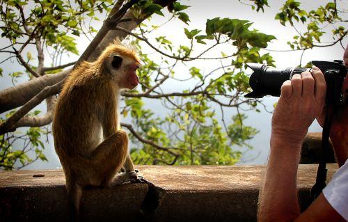 monkey model camera