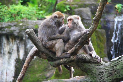 monkey zoo high