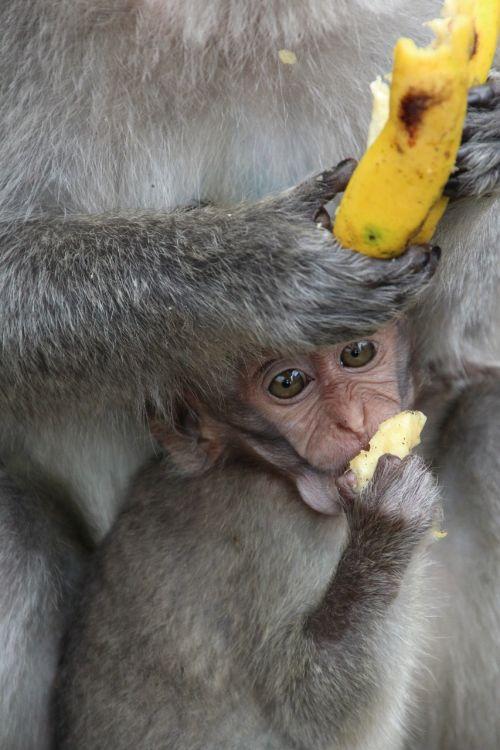 monkey baby äffchen