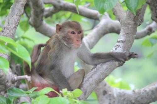 monkey alone looking