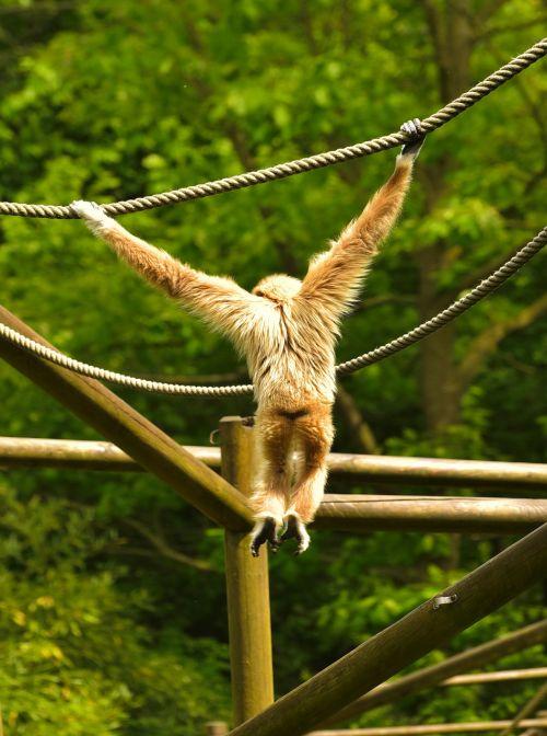 monkey hell depend