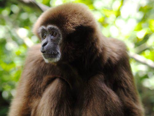 monkey green animal