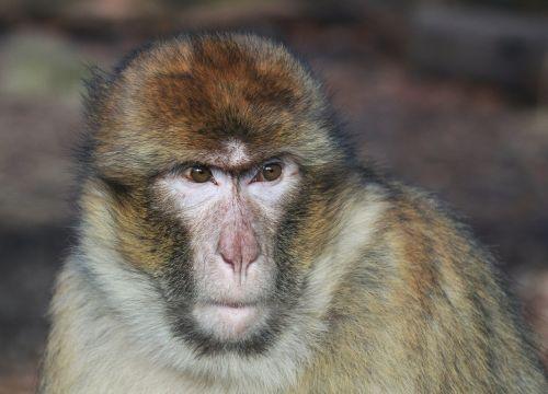 monkey animal animal world