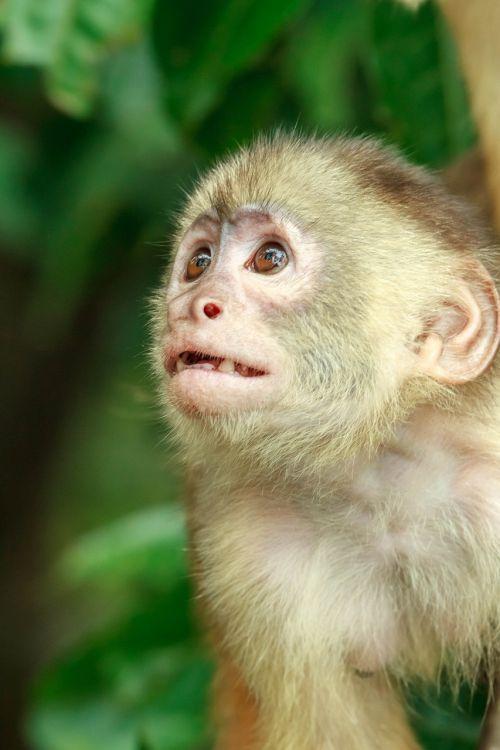 monkey jungle creature