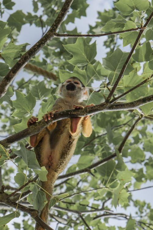 monkey skull monkey animal