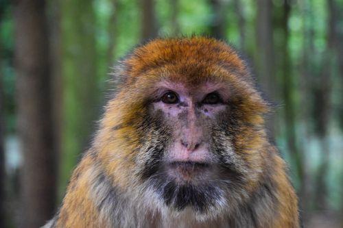 monkey portrait zoo