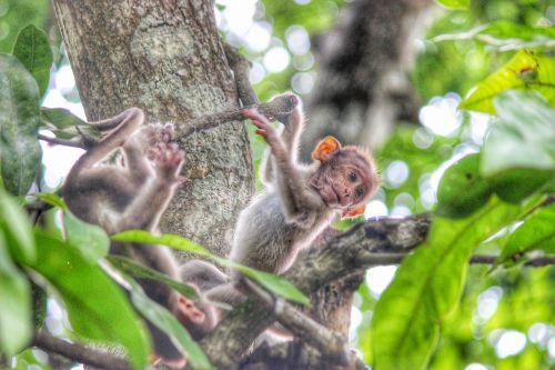 monkey kerala wayanad