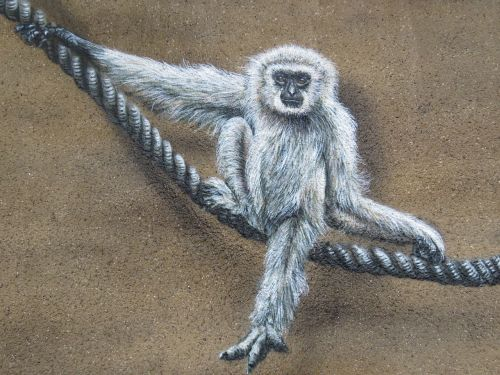 monkey wall art wall