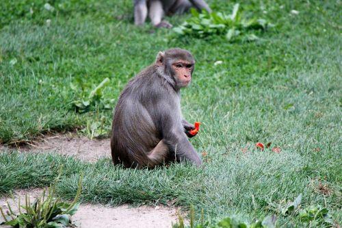 monkey zoo primate