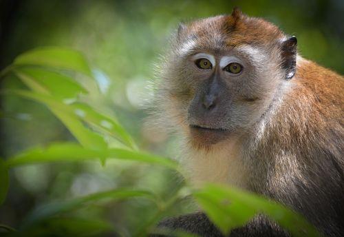 monkey wild life expensive