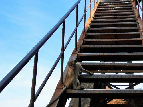 monkey animal stairs