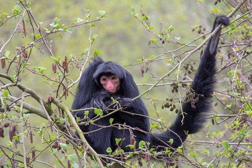 monkey  mammal  zoo