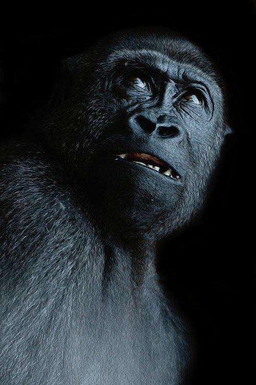 monkey  view  ape