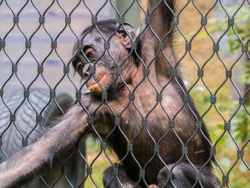 monkey  grid  foraging