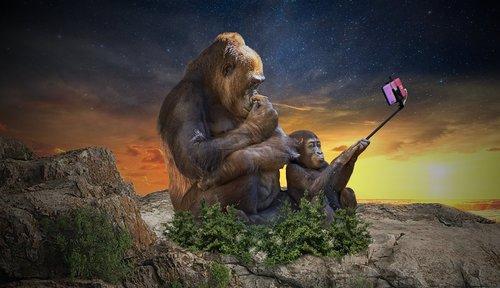 monkey  selfie  camera