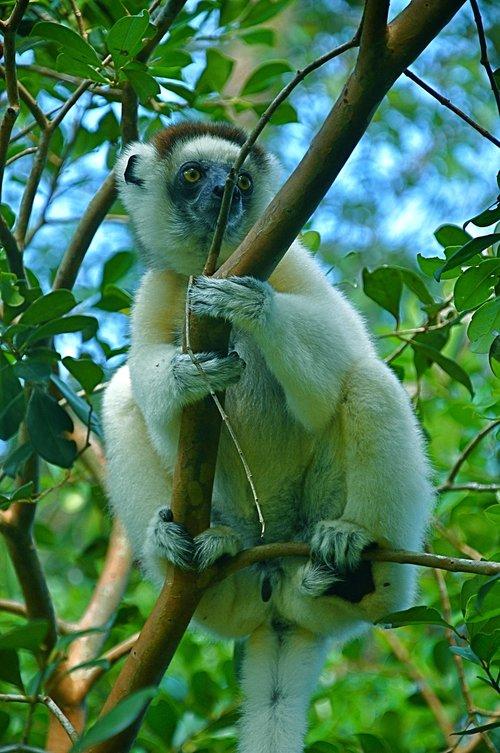 monkey  zoo  mammal