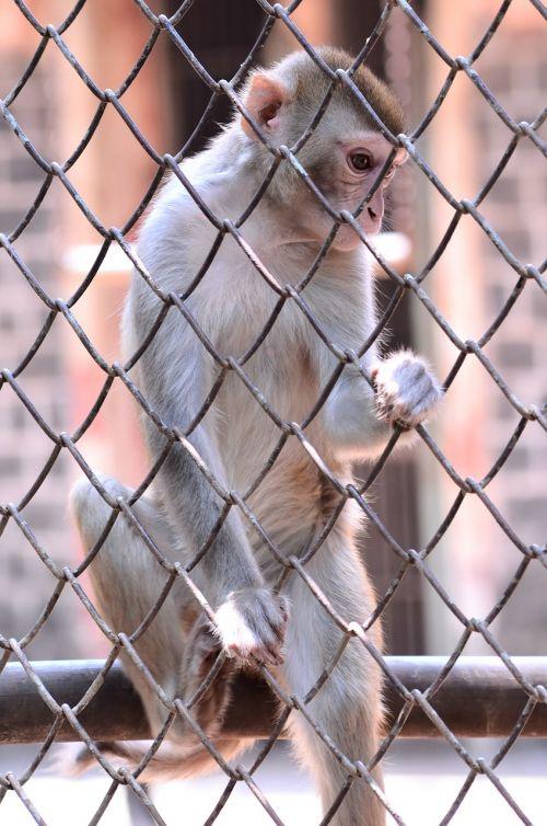 monkey climb cage