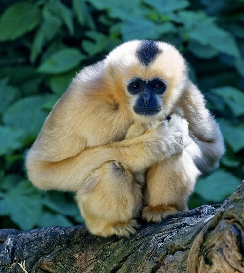 monkey  crouching  staring