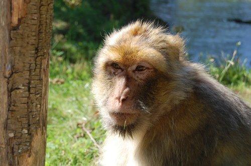 monkey  careful  zoo