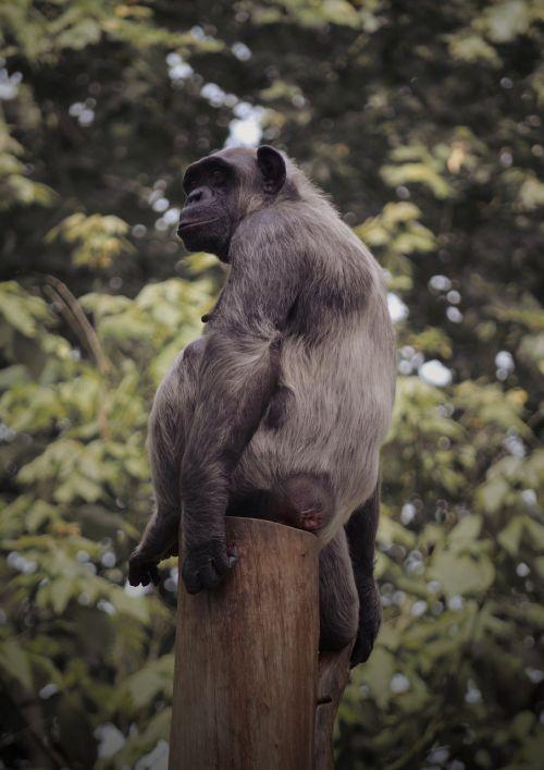 monkey sit break