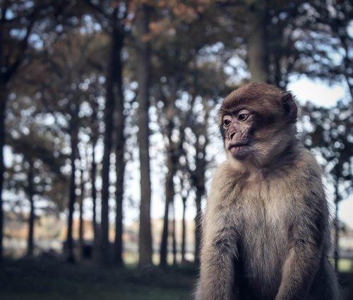 monkey  sad  zoo