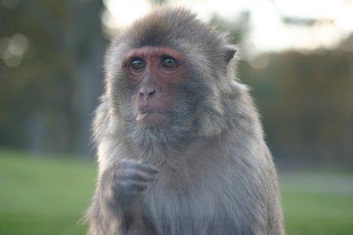 monkey  close  zoo
