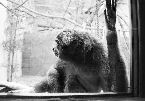 monkey  zoo  portrait