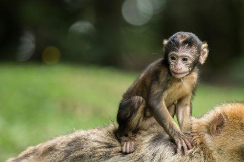 monkey monkey baby baby