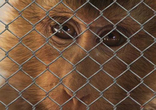 monkey sad animal world