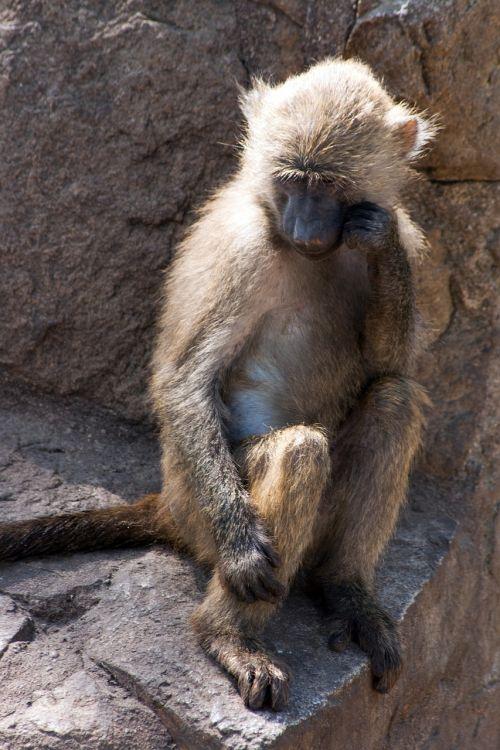 monkey animal zoo