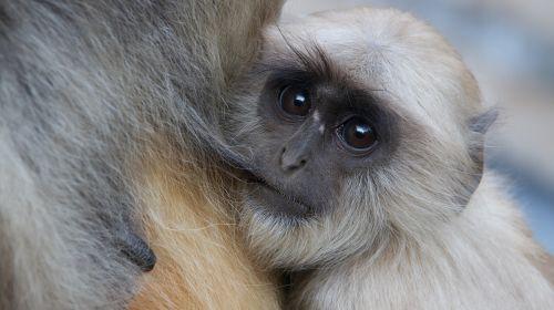 monkey frames baby
