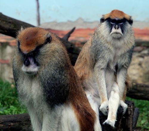 monkey rough views