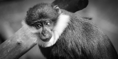 monkey,portrait,sorry,wild,animal,animals,mammal,free photos,free images,royalty free