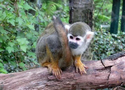 monkey děčín zoo mammal
