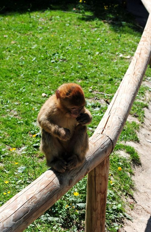 monkey monkey mountain salem