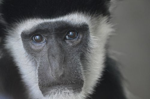 monkey primate zoo