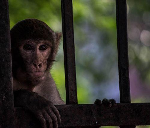monkey animal wild