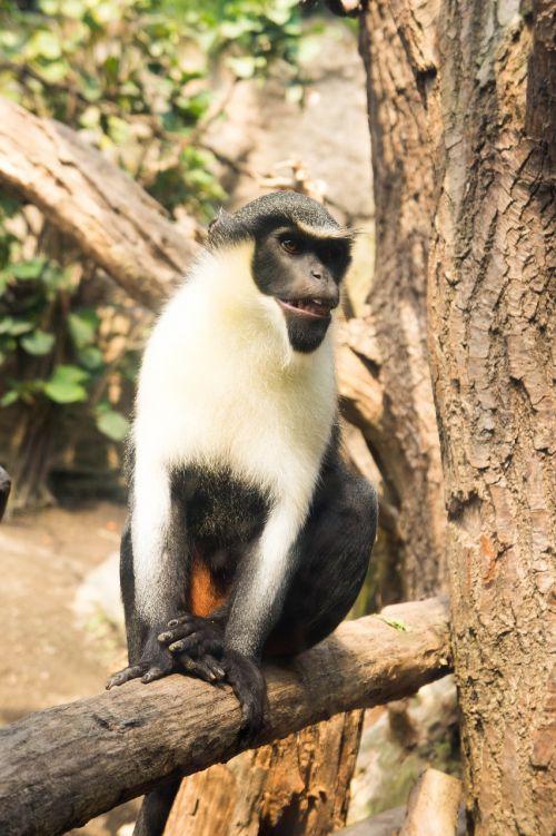 monkey tree fur