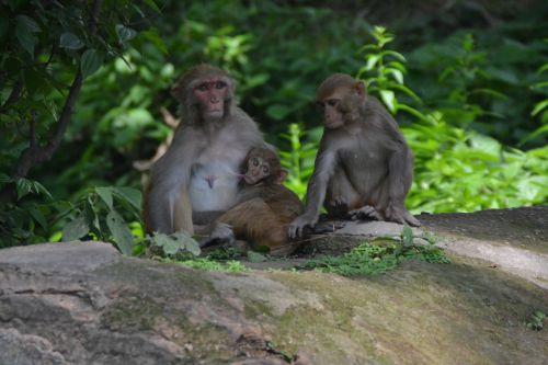 monkey baby monkey nut monkey child