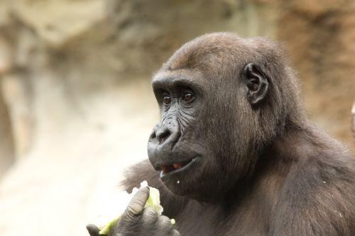monkey feeding zoo ape