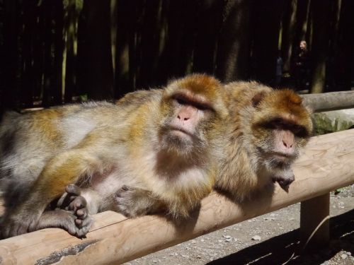 monkey mountain monkey sun