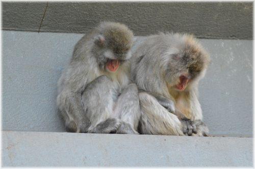 Monkey World 08