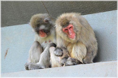 Monkey World 09